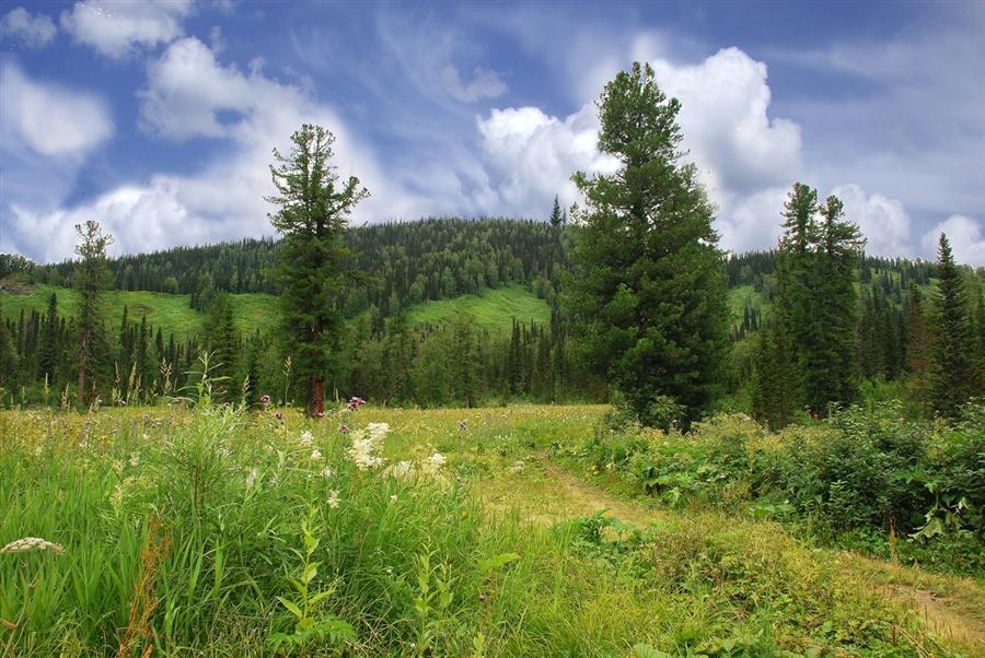 Куприяновская поляна