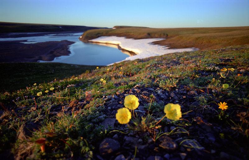 Большой Арктический Заповедник вода