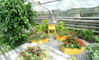 Ботанический сад в Кемерово