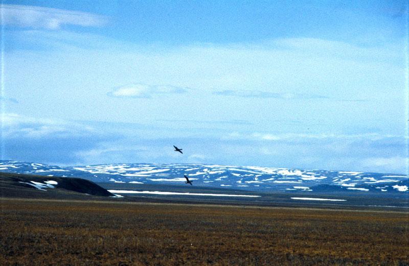Арктический заповедник