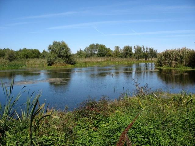 Озеро в Баевском районе