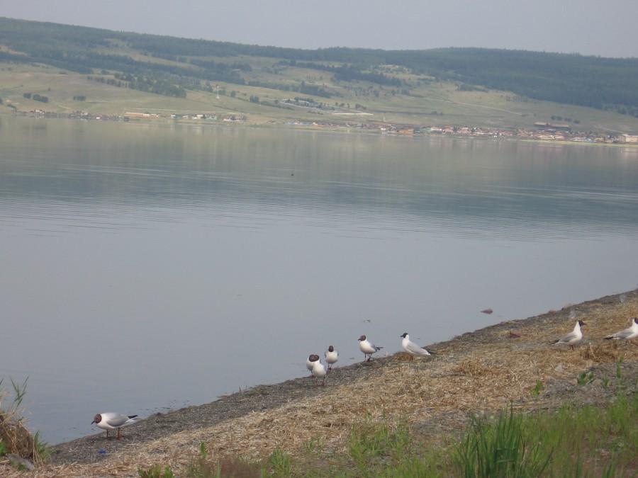 Озеро Черное в Бейском районе Хакасии