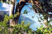 Байкало-Ленский государственный природный заповедник