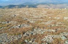 Полигональная тундра в Кузнецком Алатау