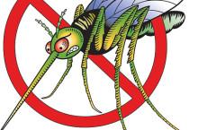 В Алтайском крае ожидается аномальная активность комаров.