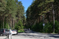 Заельцовский парк в Новосибирске  – отличный отдых для взрослых и детей