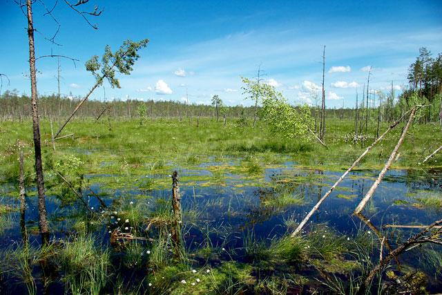 Бойские болота
