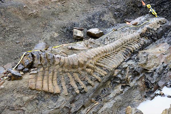 Кузбасские динозавры