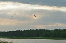 Озеро Верхнее Займище в Алейском районе