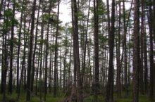 Тебеньковский пихтовый лес