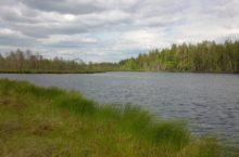 Озеро Травное в Баевском районе