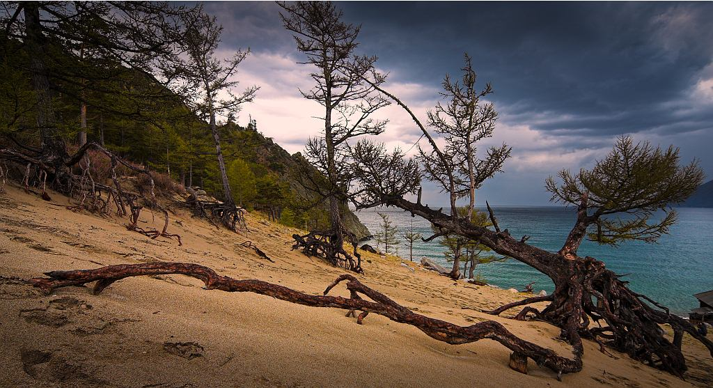 Байкал и его деревья