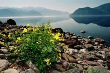 Природа Алтайского края — богатство страны.