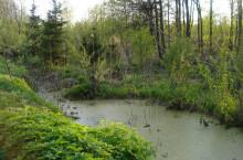 Река Ажарма в Томской области