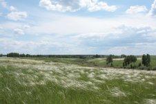 Зонально-разнотравно-ковыльная степь в Новосибирской области