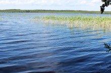 Полуостров Сугун озера Тандово в Новосибирской области