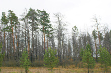 Гмирянский бор в Красноярском крае