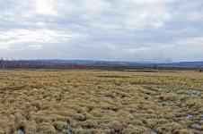 Шестаковские болота в Кемеровской области