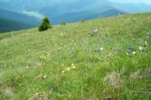 Флора и фауна Алтайского края