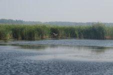 Плотавское озеро в Баевском районе