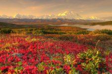 Природные зоны Западно-Сибирской равнины