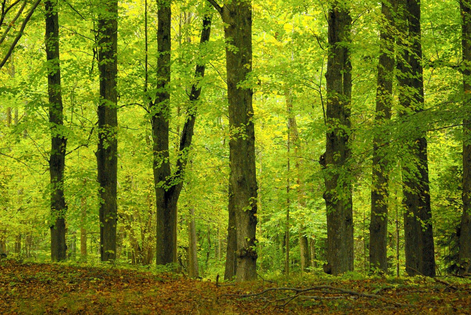 сказке лиственный лес картинки для презентации вот президиуме ростовского