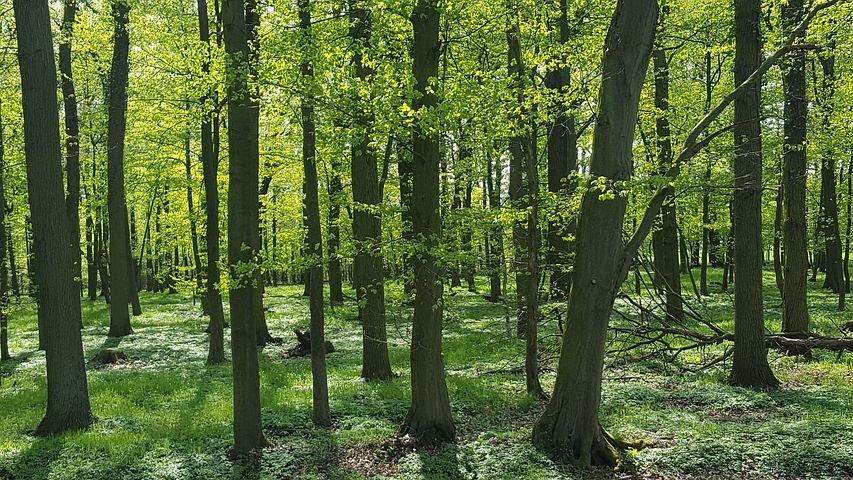 Экосистема леса фото