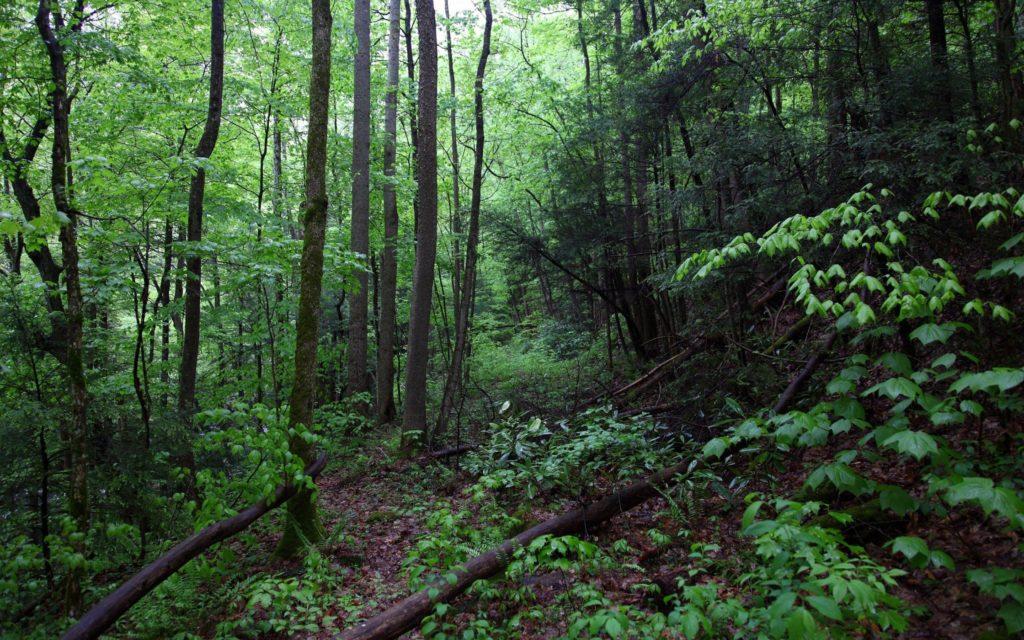 экосистема леса фото летом состоялось очередное