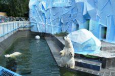 Новосибирскому зоопарку окажут финансовую помощь