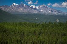Горный Алтай озеленяется. В мае в Республике Алтай высадят более 400 тысяч деревьев на 117 гектарах