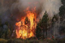Четыре тысячи пожаров зафиксировали со спутников в Новосибирской области