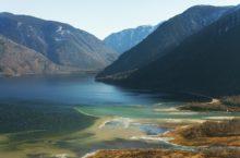 Молодые медведи стали чаще выходить на побережье Телецкого озера