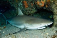 Погружение в «сонное царство» морских хищников в акватории полуострова Юкатан (Мексика)