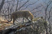 В Приморском крае открылся Национальный парк «Земля леопарда»