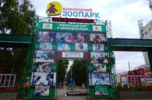 Алтайский край. В барнаульский зоопарк привезли шестилетнюю тигрицу