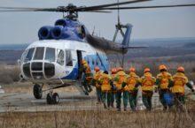Авиалесоохрана принимает участие в восстановлении лесов в Сибири и на Дальнем Востоке