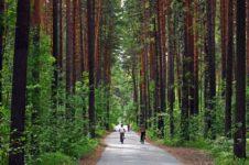 Новосибирская область. Заельцовскому бору могут присвоить статус регионального парка