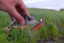 Аксессуары для рыбалки: что следует знать о воблерах?