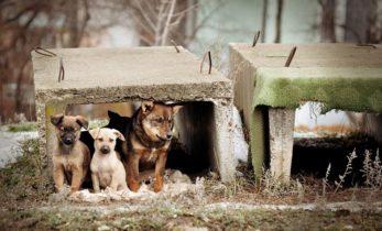 Решение проблем с бездомными животными