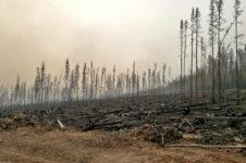 Леса Эвенкии после пожаров: что с ними стало