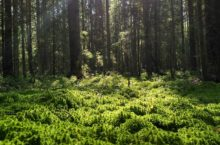 Дышать станет легче: все леса Новосибирска поставят на учёт в 2022 году