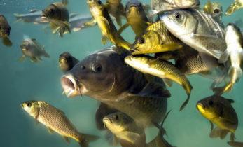 Рынок живой рыбы: предпочтения и перспективы