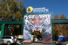 Еноты в Барнаульском зоопарки переехали в новый дом